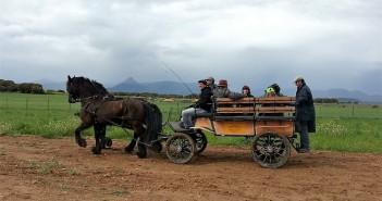 Enganche de caballos. Tracción animal