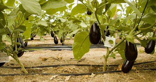 NP Mitos y verdades sobre la agricultura ecológica 2